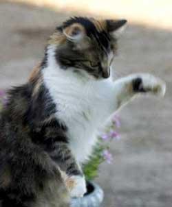 Como adiestrar a un gato