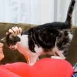 Gato y mujer embarazada