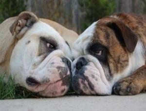 Perros mirándose
