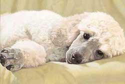 Epilepsia canina