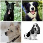 perros_morguefile_0